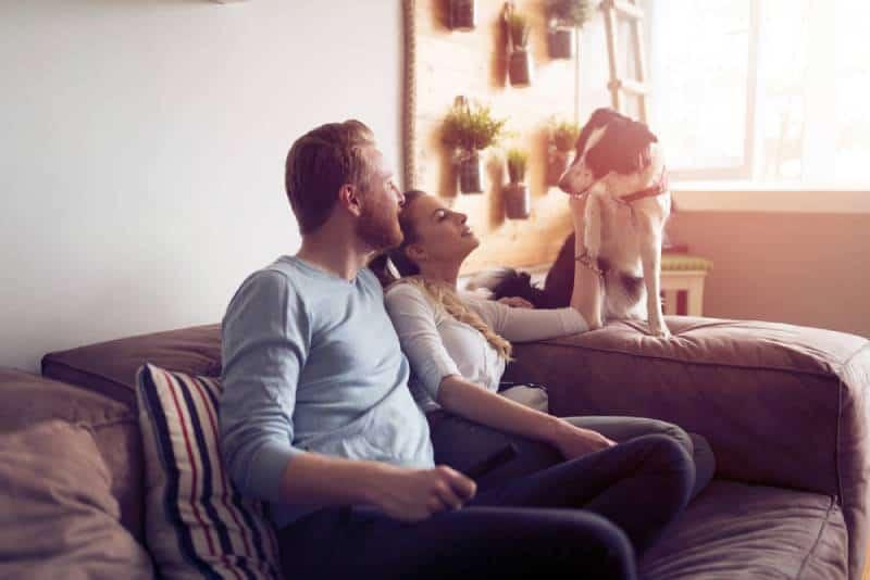 Un beau couple se détend à la maison et aime son animal de compagnie